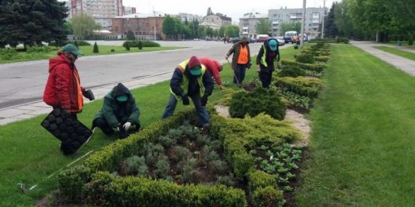 Более 3,5 тысяч цветов высажено в Кременчуге за один день