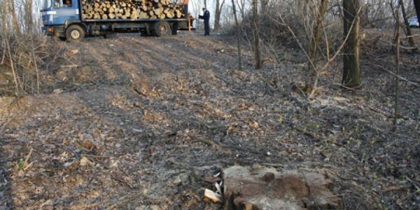 Под Кременчугом задержали грузовик с вырубленным лесом