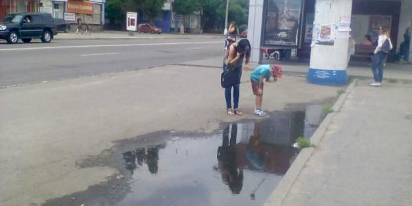 В Кременчуге - в луже на остановке возле вокзала живет стая жаб