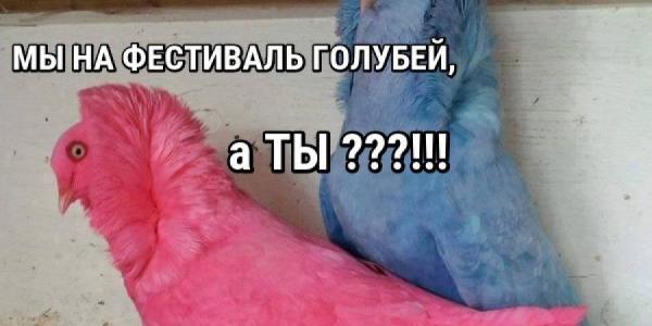 На День города в Кременчуге состоится фестиваль голубей