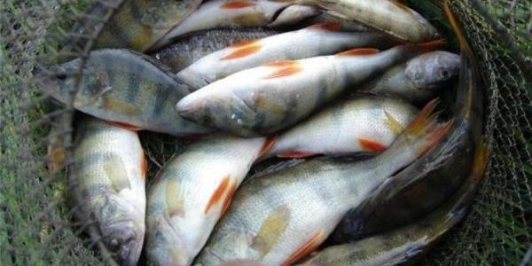 «Полтаварибохорона» напоминает: размеры штрафов за незаконный вылов рыбы значительно увеличены