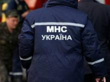 Кременчугский кот за сутки дважды «вызывал» спасателей