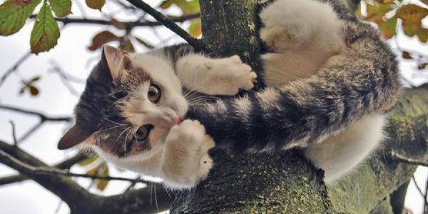 Двух котов сняли с деревьев кременчугские спасатели