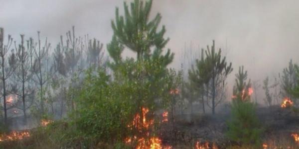 В 15 км от Кременчуга объявлена чрезвычайная пожароопасность