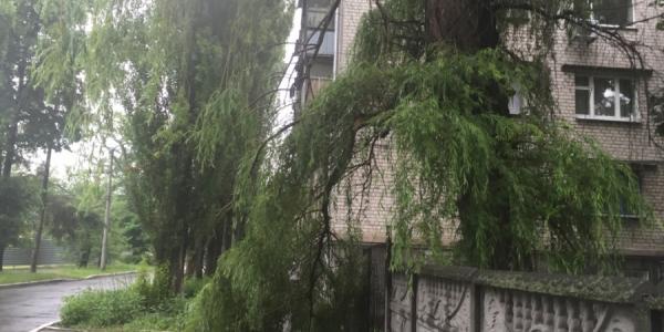 Дождь в Кременчуге ломал деревья и затапливал улицы
