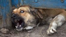 В Кременчуге собака покусала 9-летнего ребенка