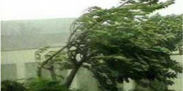 В детских лагерях под Кременчугом ураган повалил деревья
