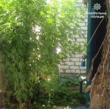 Кременчужанин дома выращивал растения «похожие на каннабис»