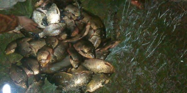 Правоохранители задержали очередного рыбака-нарушителя