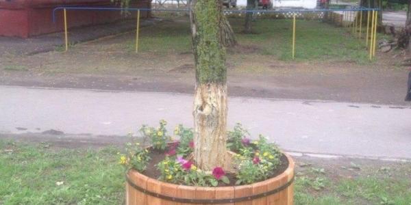 Фотофакт: на улице Победы вокруг шелковиц появились цветники