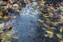 Кременчужан ждет дождливая неделя