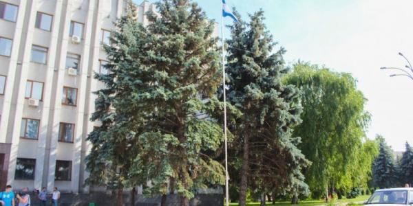 Фотофакт: голубые елки возле исполкома «прооперировали»