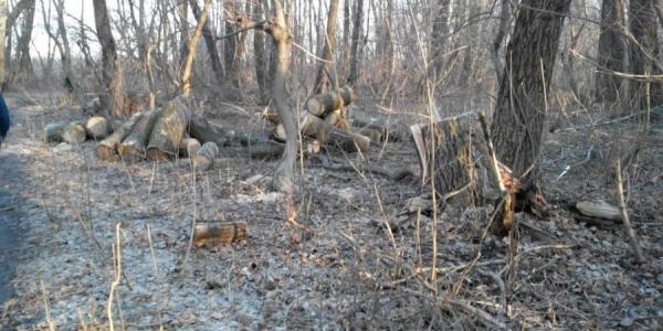 Неизвестные «пираты» рубят деревья в районе бывших артскладов