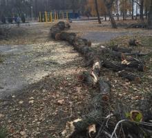 В Приднепровский парк пришли «дровосеки»