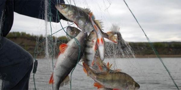 Браконьер заплатил штраф около 2 тыс. грн. за ловлю рыбы в «Белецковских плавнях»