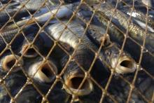 Вблизи Градижска поймали браконьеров