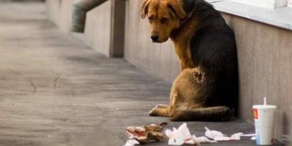В Кременчуге «собачий вопрос» решится до 2020 года