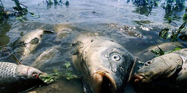 Человек, не дай рыбе задохнуться