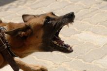 В Кременчугском районе от укуса собаки пострадало три человека