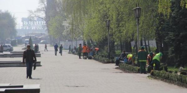В Кременчуге появилось более десяти тысяч новых деревьев