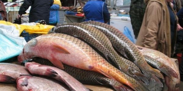 В стране нерест, а Градижск завален рыбой с икрой
