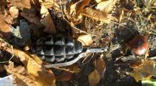 В Кременчуге нашли предмет похожий гранату