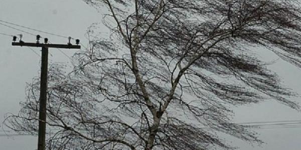 В Кременчуге сильный ветер повалил шесть деревьев