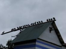 В Кременчуге на выходных горела голубятня