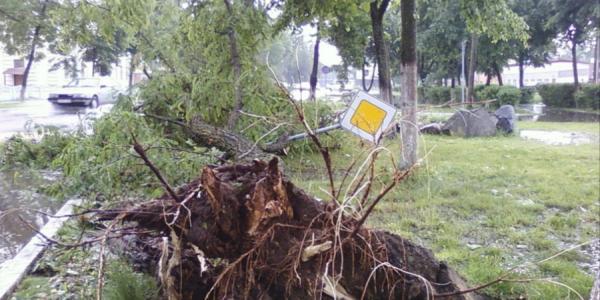 В Кременчуге сильный ветер корчевал деревья и «сносил крыши»