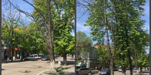 На центральных улицах Кременчуга появилось много сухостоя
