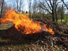 За сжигание опавшей листвы кременчужанам обещают «от двух до пяти»