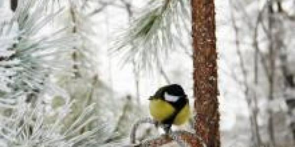 Погода на сегодня: зима снова напомнит о себе снегом
