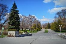Погребной продал горисполкому цветов и деревьев на 2,4 млн. грн.