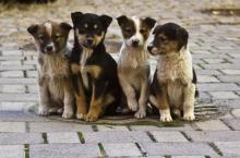 В Кременчуге стерилизовали 150 бездомных собак из 5-6 тысяч