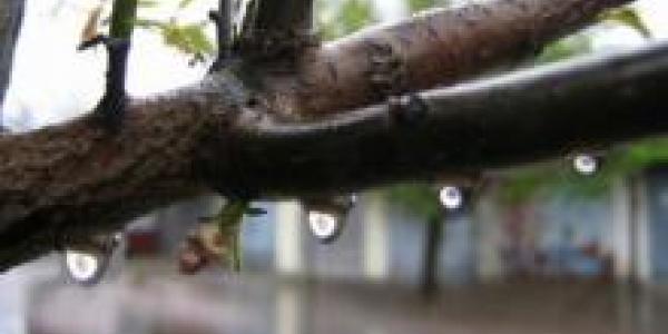 На выходных Кременчуг ожидают дожди и похолодание