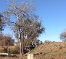 После 20 ноября будет перекрыт мост через реку Хорол в Миргороде