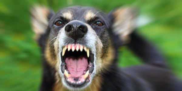 В Кременчуге участились случаи покусов бродячими собаками