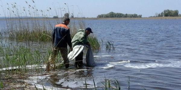 К зарыблению Кременчугского моря присоединились предприятия, которые сбрасывают отходы в реку