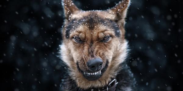 СЭС обеспокоена: в Кременчуге участились факты покуса людей собаками