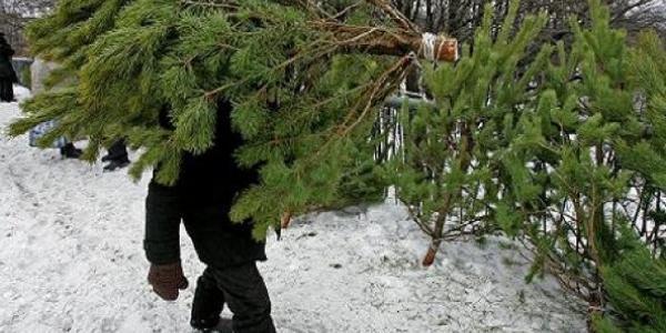 Кременчугскому предпринимателю заработать на продаже елок не удалось
