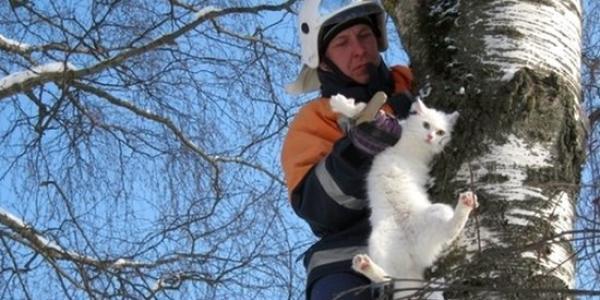 В Кременчуге спасатели снимали с дерева влюбленную пару