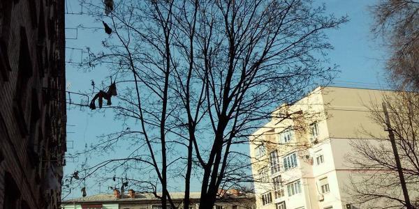 В Кременчуге растет «Дерево тряпок»