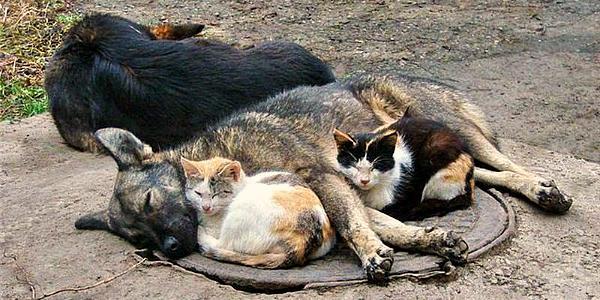 «Спецсервис-Кременчуг» будет самостоятельно стерилизовать бродячих животных