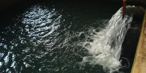 Хоча у комунального підприємства досі відсутні мережі спостережувальних свердловин для контролю за якісним станом підземних вод.