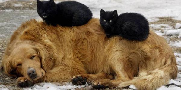 К 2019-му году в Кременчуге не станет 70% бродячих собак
