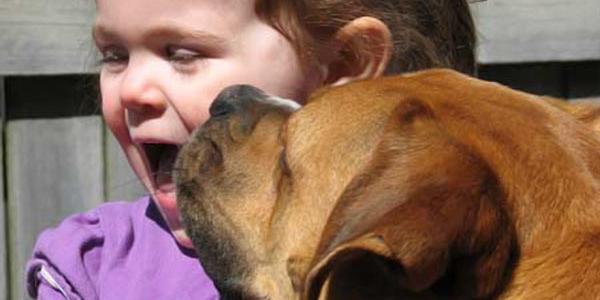 В Кременчуге опять ребенка покусала собака