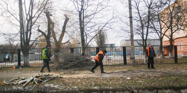На Раковке и в центре Кременчуга кронируют деревья