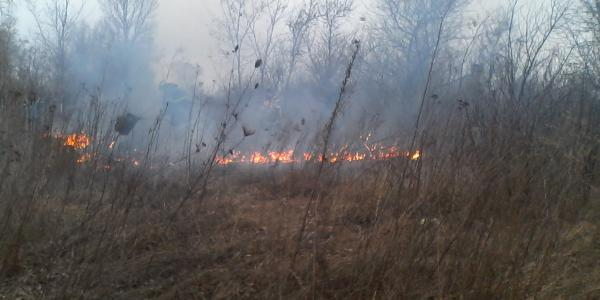 Десять гектар подлеска выгорело в черте Кременчуга