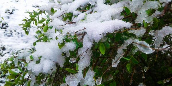 Полтавские синоптики: опыт апрельских морозов Полтавщина получила в 1979 году
