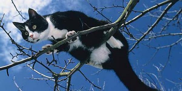 В Кременчуге спасатели собрали урожай котов